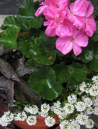 Soggybutgrowingflowers