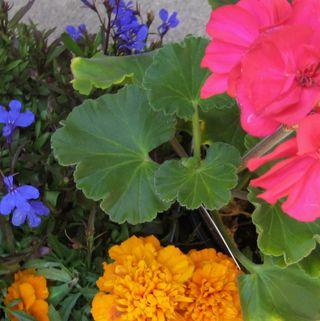 Flowersfrommygarden