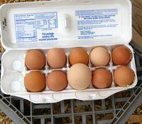 Eggsfromourgrrls