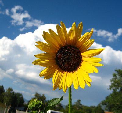Summerinaflower