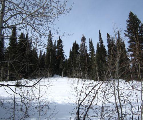 Barebonesforest