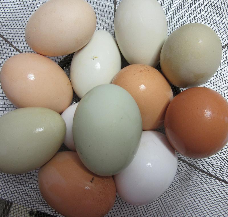 Eggsfromsunday