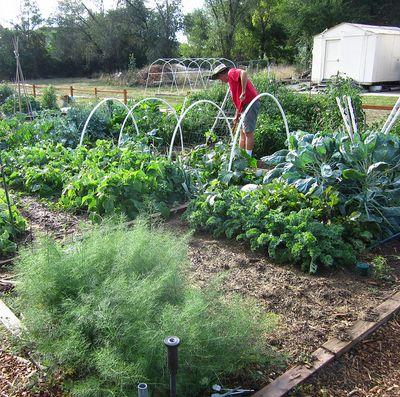 Gardenisgrowing