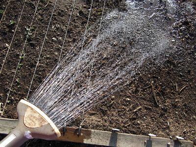 Wateringthegarden