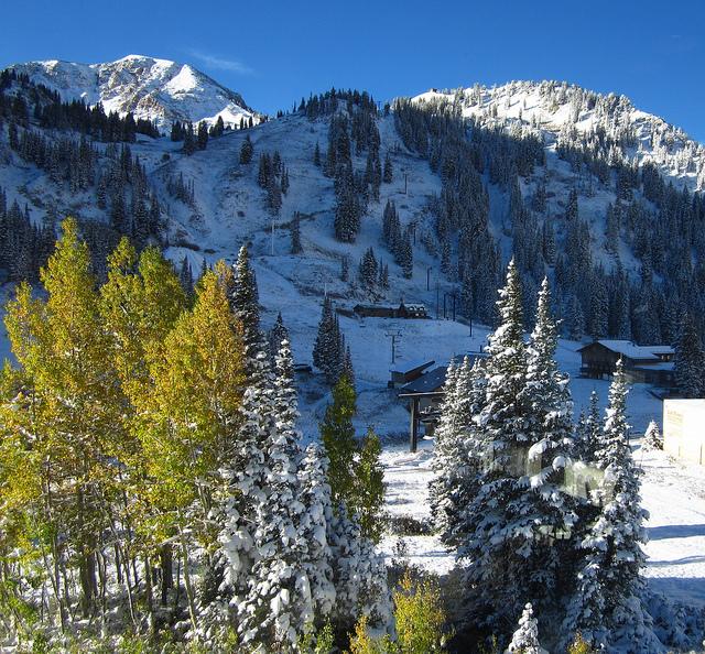 Snowcoveredtrees