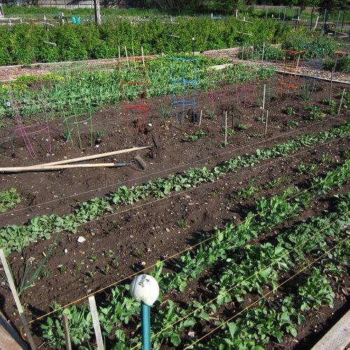 Alans garden plot