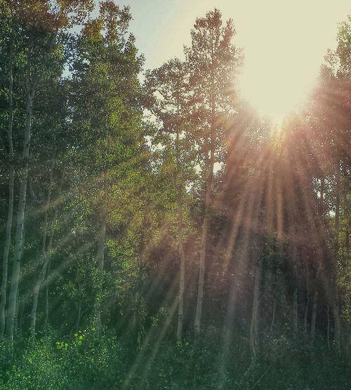 Sunflashing