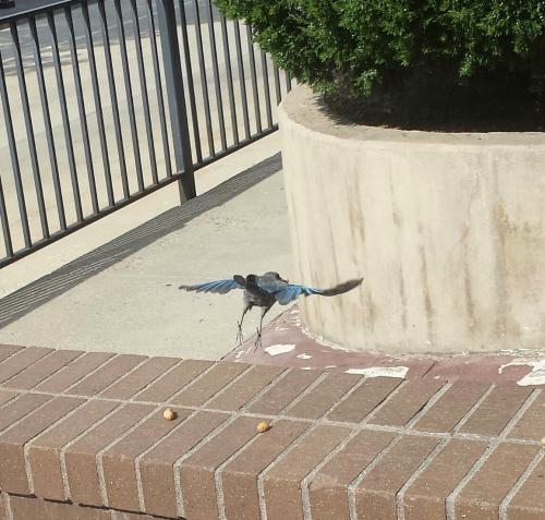 Birdbutt