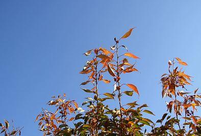 Colors_of_fall_saturday_sky