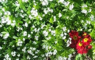 Woodruffandprimrose