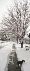 Winterisjustboringshadesofgray