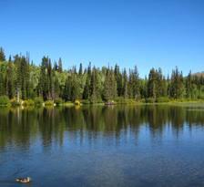 Laketreesandsky_3