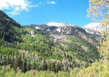 Snowbirdgreensgalore