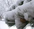 Snowydecemberdayinslc