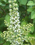 Whiteflowersonastemtall